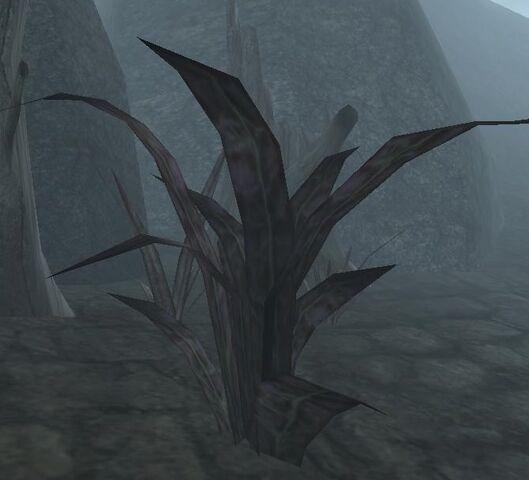 File:Scathecraw (Morrowind).jpg