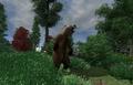 Bear Season Locate.png