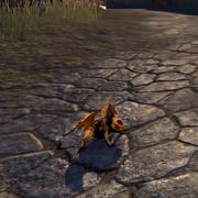 Ирисовая лягушка-дракон