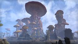 Садрит Мора (Online Morrowind)