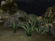 Прибрежная флора (TES III) 02