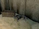 Тыква (собака)