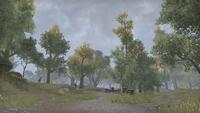 Сиродил (Online) — Дебри Великого леса