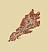 Стержневой корень (иконка)