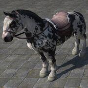 Piebald Destrier Пегий боевой конь