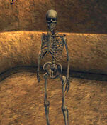 Skeleton Archer (Morrowind)
