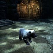 Атморский снежный медвежонок