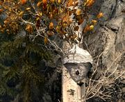 Beehive in Skyrim