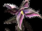 Belladonna (Skyrim)