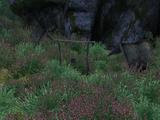 Campamento Bosque del Oeste