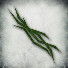 Болотный тростник