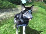 Пёс Сакипы