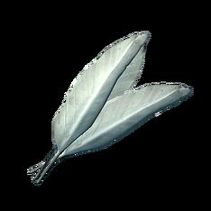 Перья фелсаадской крачки