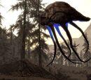 Netch (Dragonborn)