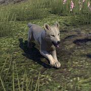 Ледяной волчонок с Белой реки