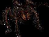 Ragno congelante (Skyrim)