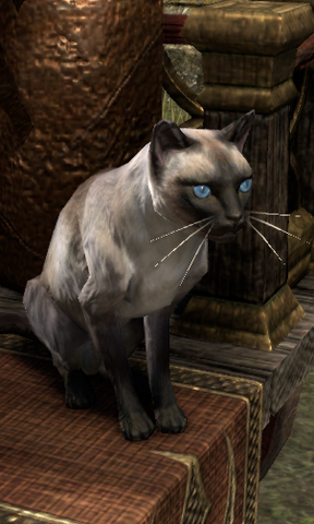 File:Ruby (cat).png