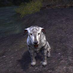 Барбас в форме пса