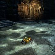 Золотоспинный паук