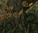 Roland's Tear (Quest)