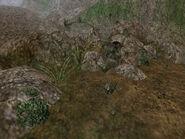 Зелёный лишайник и горьколистник