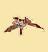 Цветок алканны (иконка)