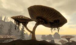 Emperor Parasol in Dragonborn