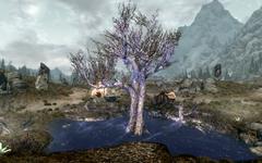 Сонное дерево