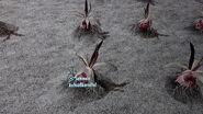 Aschsüßkartoffel Feld