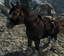Pferd (Skyrim)