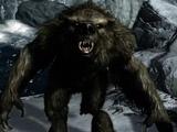Werbär (Dragonborn)