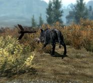 Wolf unter Beschuss