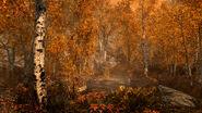 Herbstwald 4K