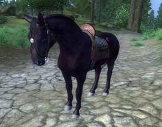 Pferd-schwarz