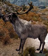 Deer Skyrim