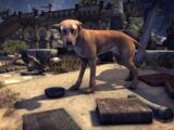 Alik'r-Dünenhund