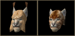 Khajiit (Morrowind)