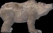Чумний ведмідь Bloodmoon