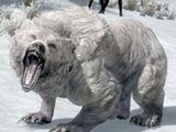 Білий ведмідь (Skyrim)