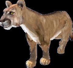 Гірський лев