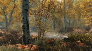 The Elder Scrolls V Skyrim Fall Forest