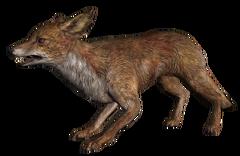 640px-Fox