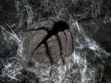 Павуче яйце (Skyrim)