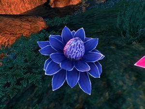 Квітка мани Ліхор (Oblivion)