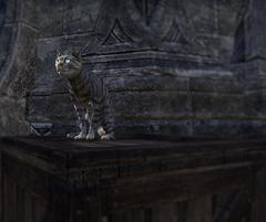 Azura Cat