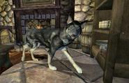 Собака (Oblivion)
