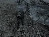 Собака (Skyrim)