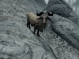 Коза (Skyrim)