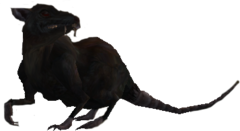 Rat Morrowind