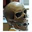 ON-icon-череп